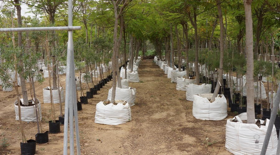 Tree Nursery Stock Assessment UAE