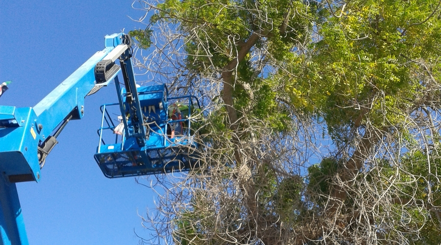 Training Staff Tree Pruning
