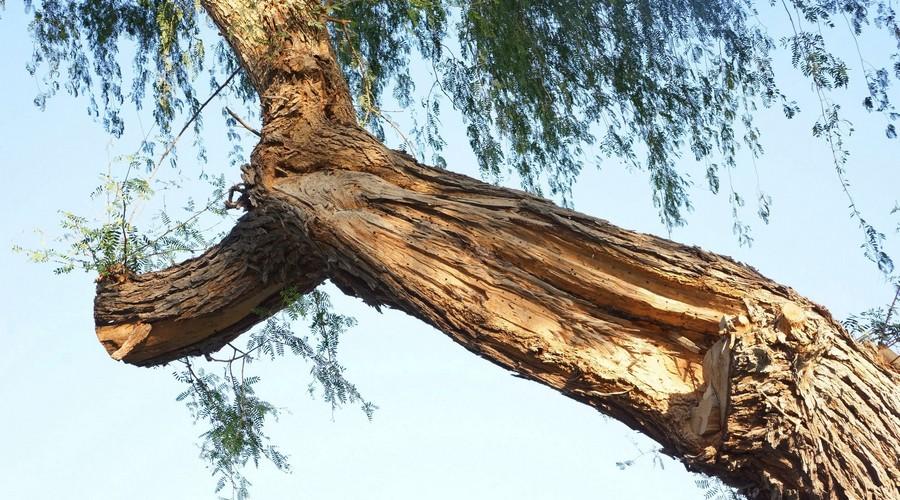 Tree Risk Assessment UAE