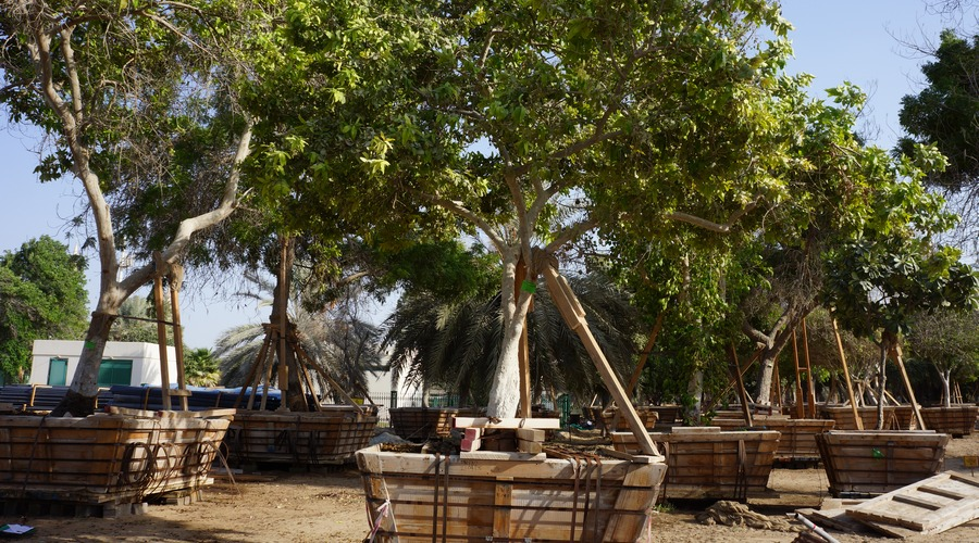 Tree Preparation and Transplanting UAE