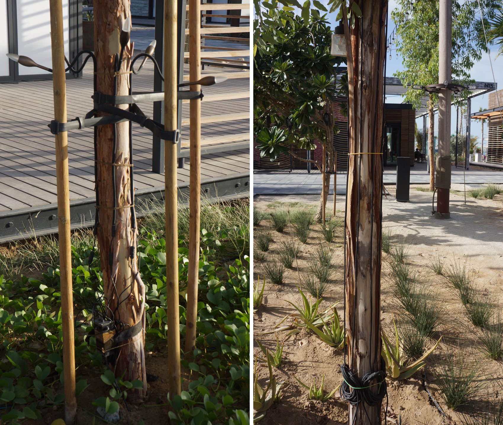 Incorrect attachment of electric cables to a tree