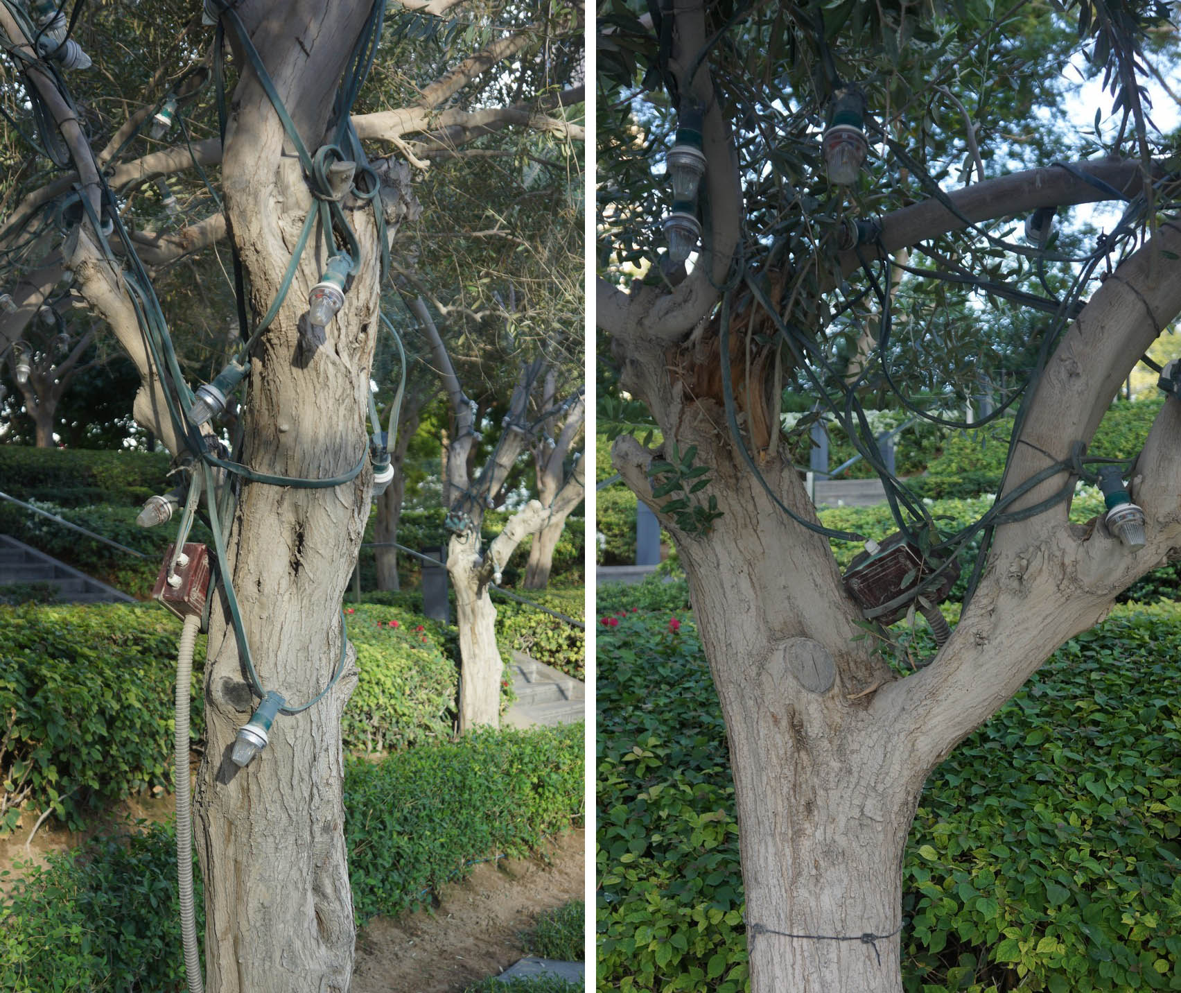 messy cabling in trees