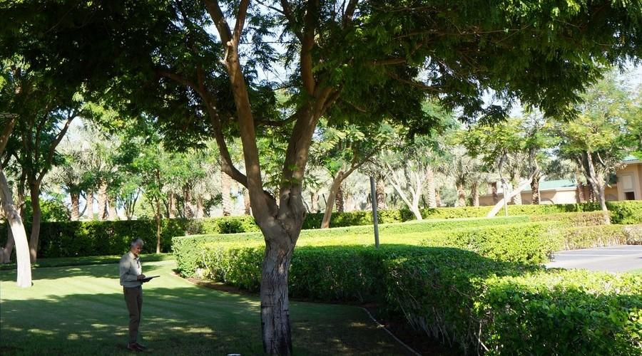 MLD Tree Surveying UAE