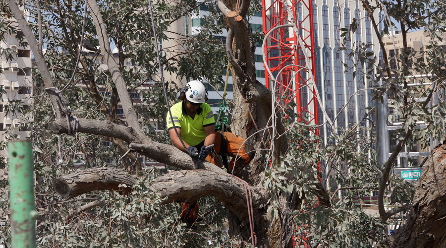 Tree Surgery in the UAE organised by MLD
