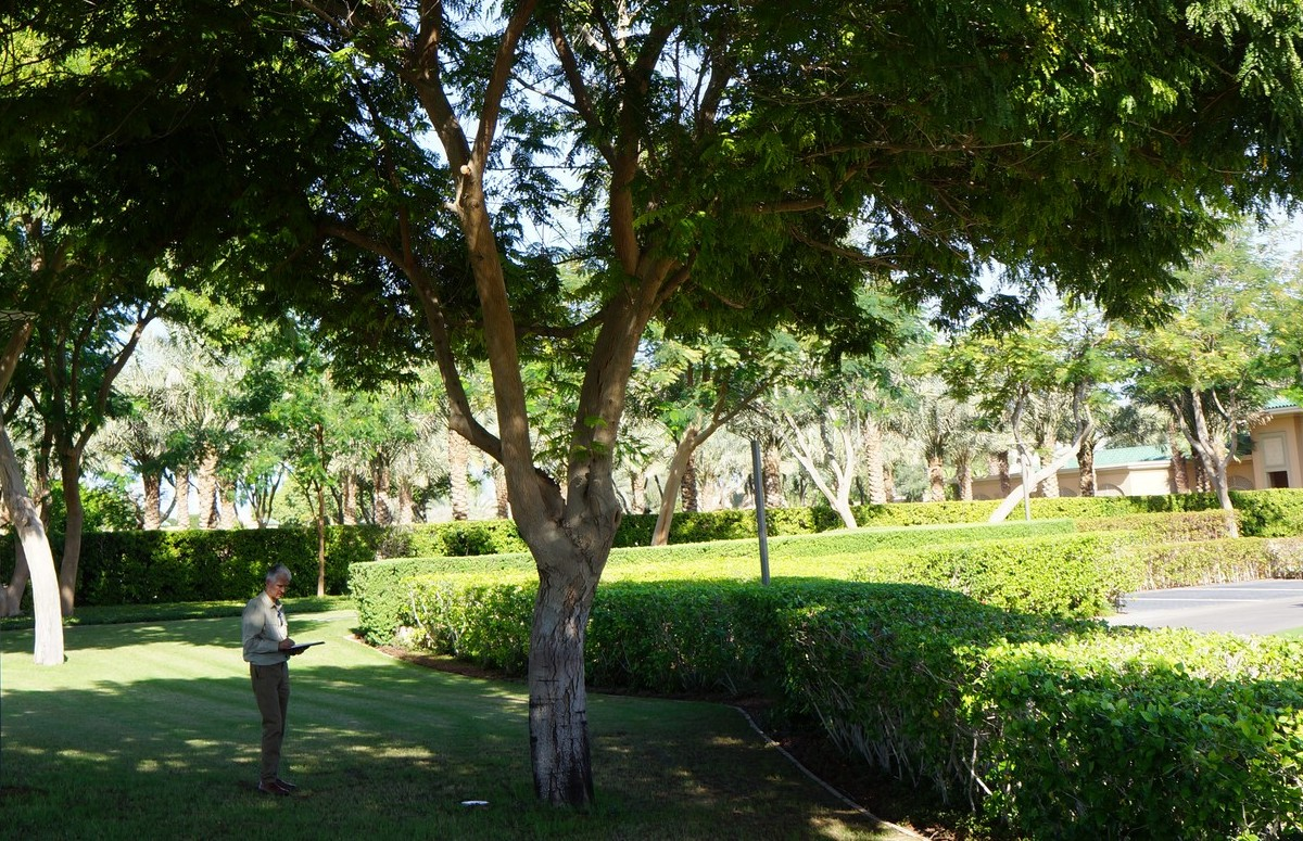 Surveying trees in Dubai